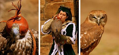 Sokoły. Falconry. Linlithgow.