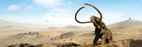 Mammoth. 9gods.